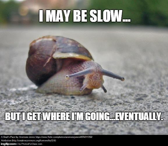 slow-snail-meme_2.jpg